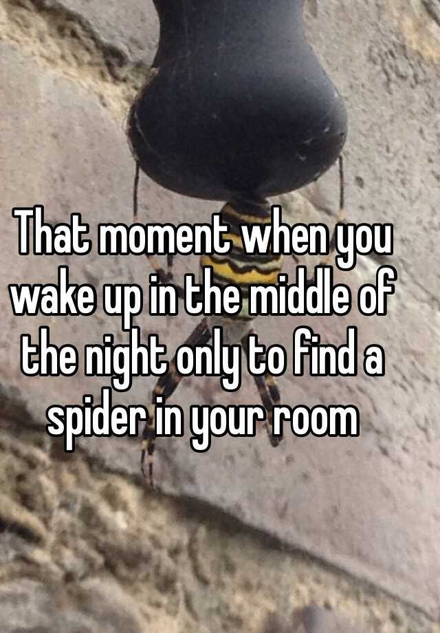 That moment when you wake up in the middle of the night only to find a spider in your room