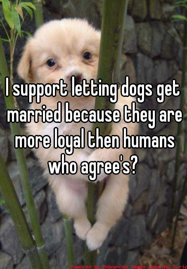 I support letting dogs get married because they are more loyal then humans who agree's?
