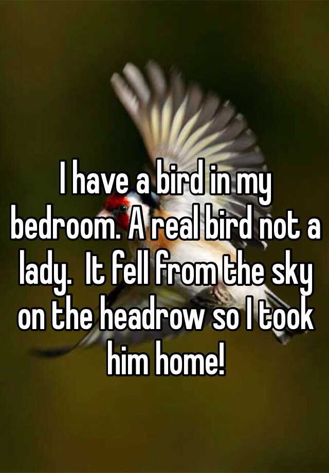 I have a bird in my bedroom. A real bird not a lady.  It fell from the sky on the headrow so I took him home!