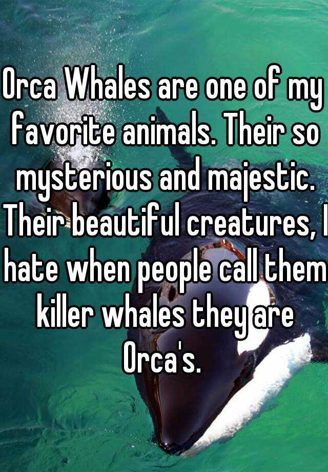 Orca Whales are one of my favorite animals. Their so mysterious and majestic. Their beautiful creatures, I hate when people call them killer whales they are Orca's.
