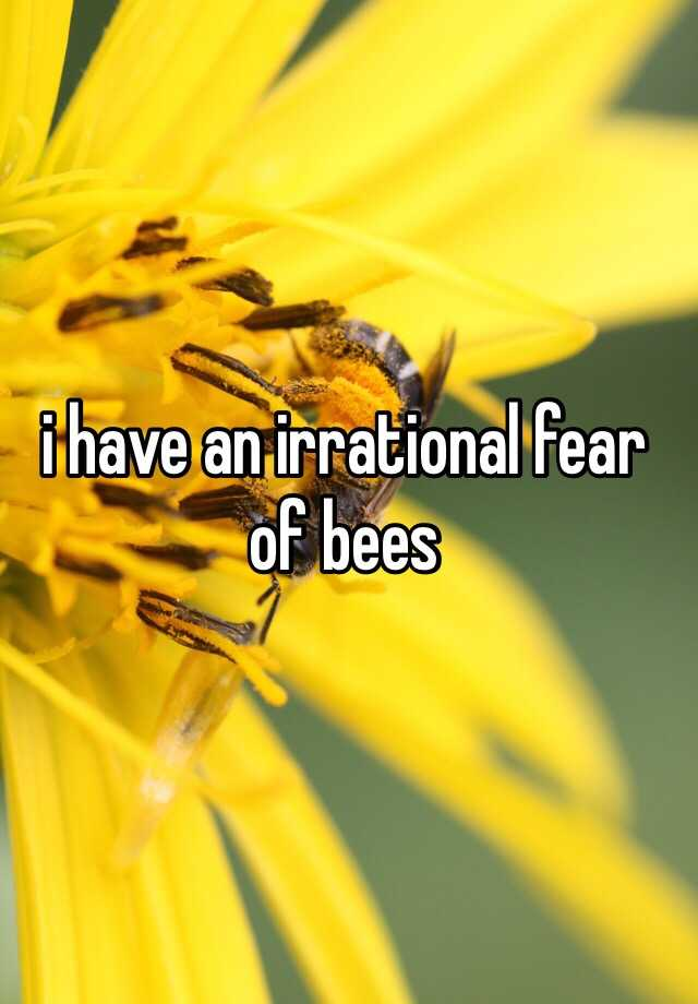 i have an irrational fear of bees