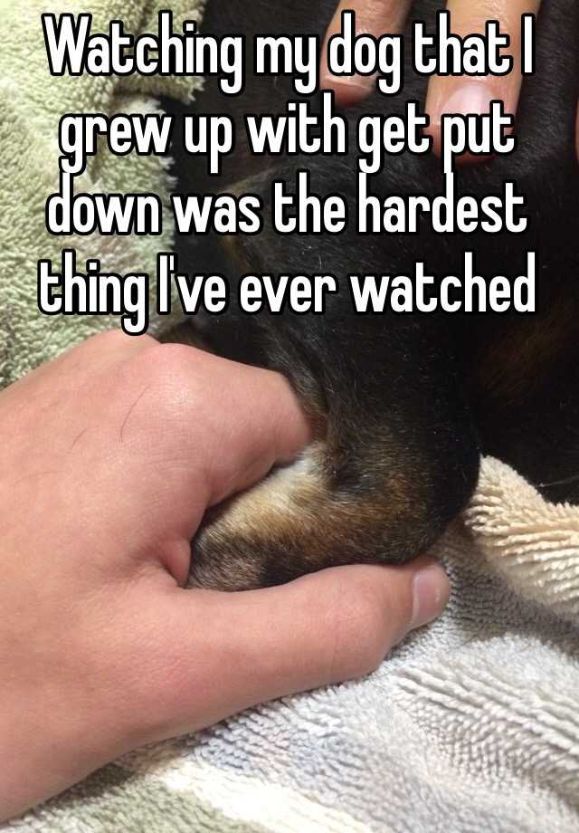 Watching my dog that I grew up with get put down was the hardest thing I've ever watched