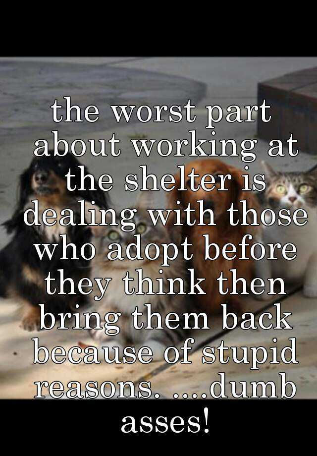 the worst part about working at the shelter is dealing with those who adopt before they think then bring them back because of stupid reasons. ....dumb asses!