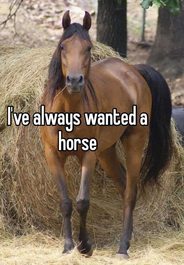 I've always wanted a horse